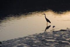 2只鸟出海口 图库摄影