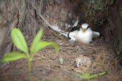 2只鸟饲养被盯梢的热带白色 库存照片