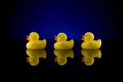 2只鸭子反映行橡胶 库存照片