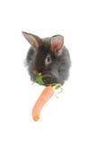 2吃狮子兔子时间 免版税库存图片