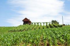 2名克罗地亚人农场 免版税库存照片