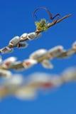 2唤醒的春天 库存图片