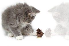 2圣诞节小猫pinecone反射 图库摄影
