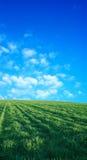 2在天空麦子的美好的蓝色域 免版税图库摄影