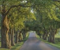 2在遮荫结构树的运输路线 免版税库存照片