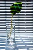 2块玻璃叶子 免版税库存照片