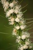 2多种花色鲜明之植物 图库摄影