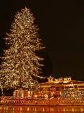 2大圣诞树 免版税库存照片