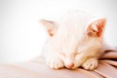 2天使猫照片休眠 免版税库存照片