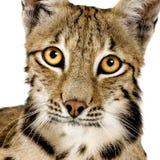 2天猫座年 库存图片