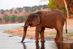 2头大象泥泞的配置文件 免版税库存图片