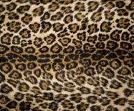 2头豹子打印 免版税图库摄影