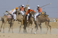 2头骆驼马球 库存照片