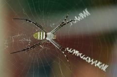 2奇怪的蜘蛛 免版税库存图片