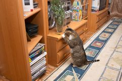 2好奇的猫 免版税库存照片