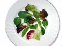 2婴孩蔬菜沙拉 免版税库存照片