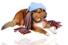 2寒冷狗敏感 库存照片