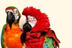 2对夫妇金刚鹦鹉 免版税库存照片