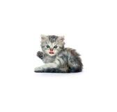 2小猫 库存图片