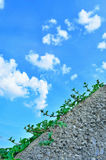 2小的植被 免版税图库摄影