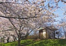 2庭院日语 免版税库存照片