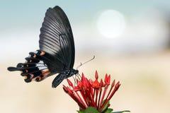 2振动的蝴蝶 库存照片