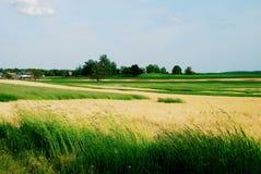 2早期的农厂夏天 库存图片