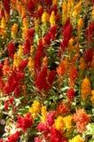 2朵五颜六色的花 库存照片