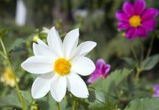 2朵收集花 免版税图库摄影