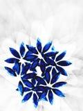 2朵紫色的花 免版税库存照片