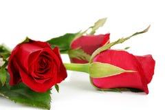 2朵美丽的花 图库摄影