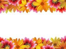 2朵花框架 免版税图库摄影