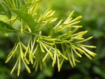 2朵花绿色 图库摄影