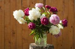 2朵花 免版税库存图片