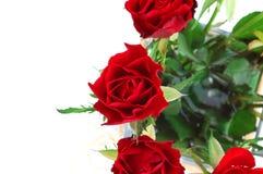 2朵详细资料红色玫瑰 免版税图库摄影
