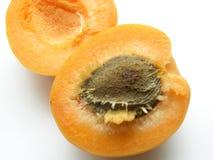 2杏子 免版税库存图片