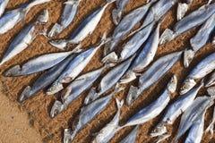 2条干燥鱼 免版税库存图片