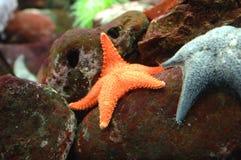 2条异乎寻常的鱼 库存图片