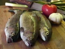 2条新鲜的鳟鱼 库存照片