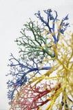 2条结构树静脉 免版税库存图片