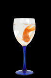 2条血液鱼鹦鹉 免版税图库摄影