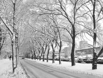 2条路冬天 免版税库存照片