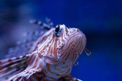 2条鱼 免版税库存图片