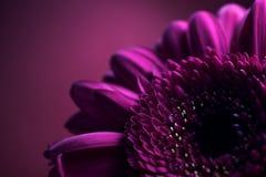 2构成花紫色 免版税图库摄影