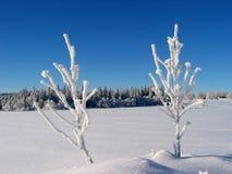 2根结霜的枝杈 库存图片