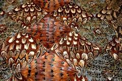 2根羽毛挂毯 库存图片
