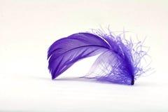 2根羽毛紫色 库存图片