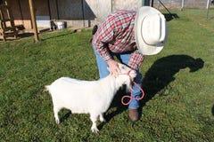 2检查的山羊  库存照片