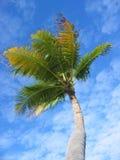 2棕榈树 免版税库存照片