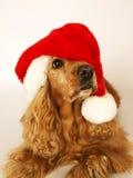 2棕色圣诞节斗鸡家帽子红色西班牙猎& 免版税库存图片